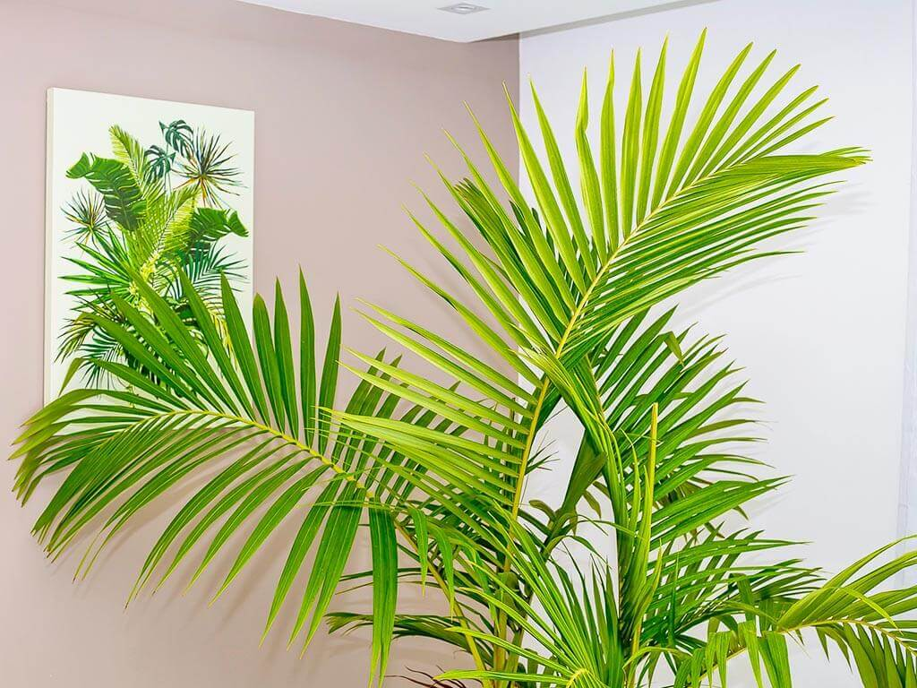 Green interior design details by ProMas, indoor palm tree and palm canvas