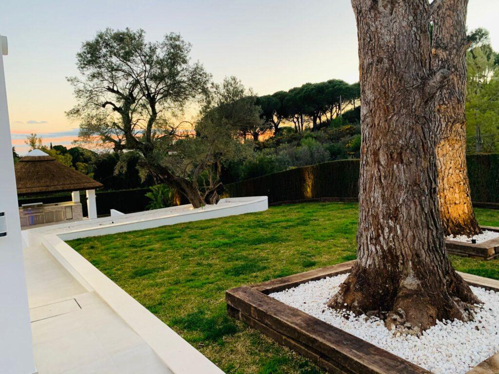 Landscaped garden around tree