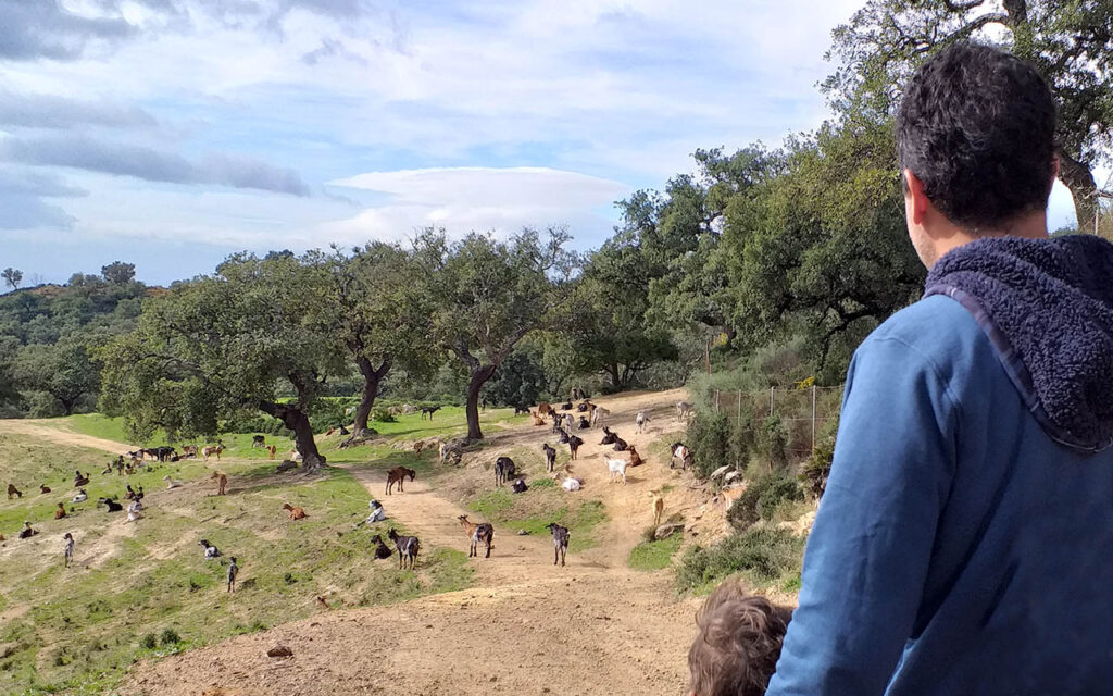 Discovering goats in the countryside of Marbella