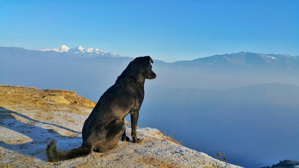 Dog enjoying nature